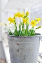 Pozvěte si jaro domů