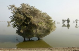 WOW: Co dokáže příroda