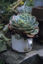 Zajímavý tip: Ze sukulentů jsou ty nejkrásnější dekorace